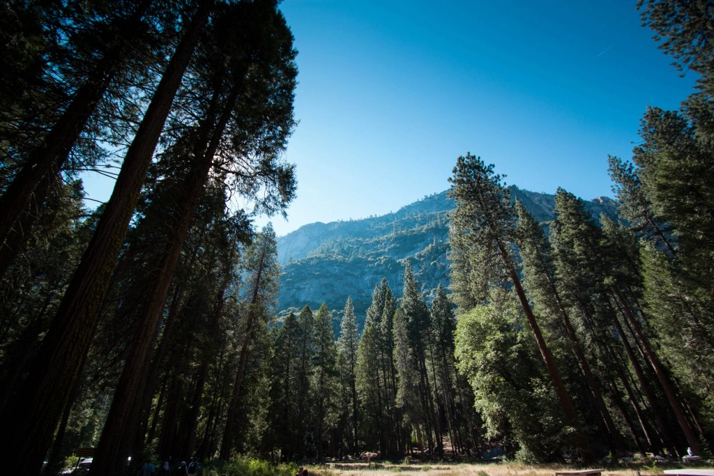 Mountains_and_Forest_in_Yosemite_National_Park